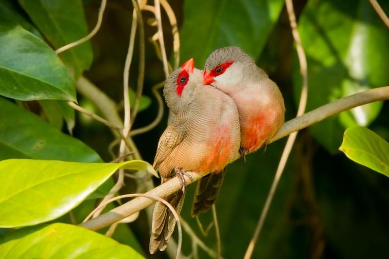 love_birds_6