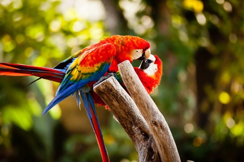 love_birds_7