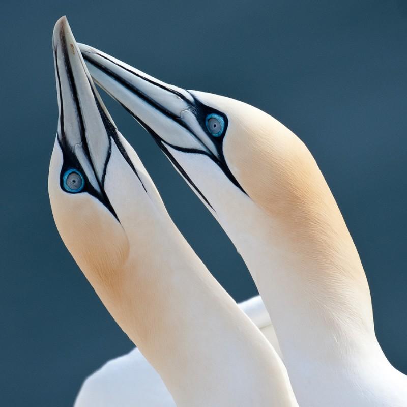 love_birds_9
