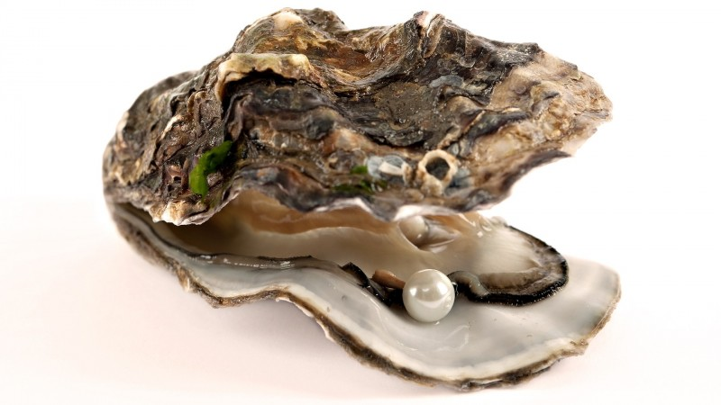 Oysters can change gender depending on which is best for mating. Talk about successful adaptation.