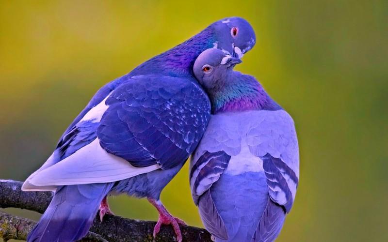 love_birds_14