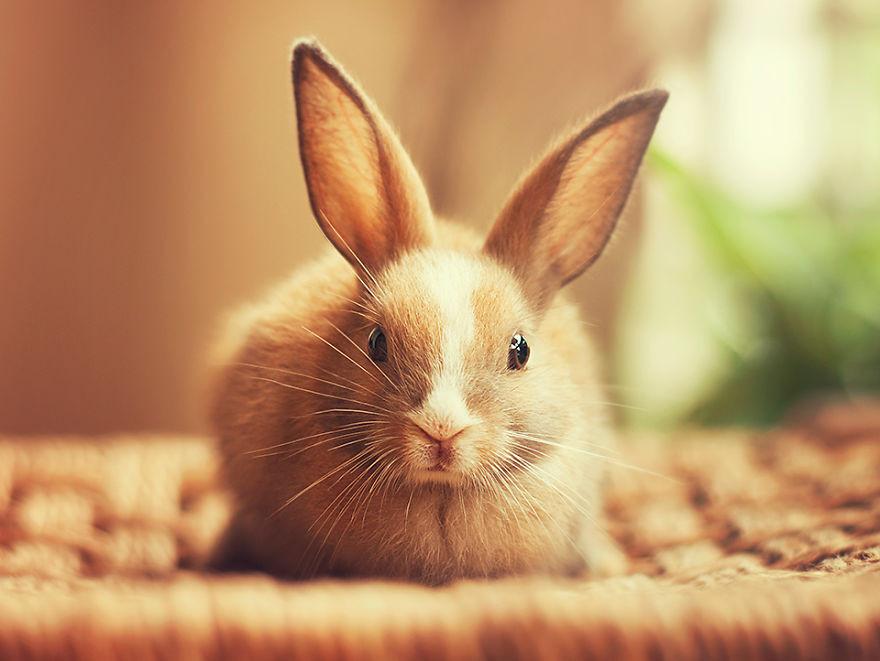 Portrait of an adorable rabbits