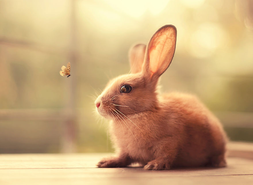 Portrait of an adorable rabbits