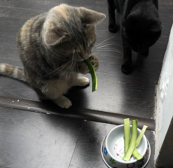 Cats know what meal is better