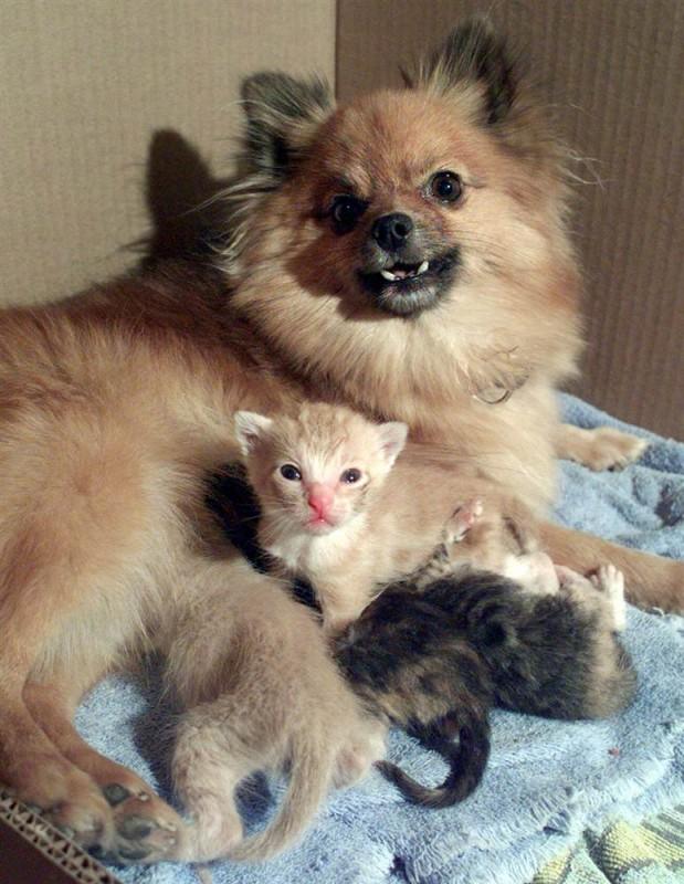Ences from Kansas, sheltered four kittens.