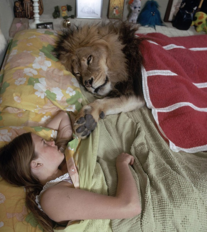 Neil the lion sleeping with Melanie Griffith in their home in Sherman Oaks, California, 1971