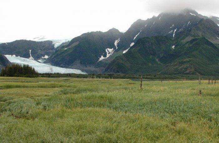 Pedersen Glacier, Alaska. 1930 - 2005