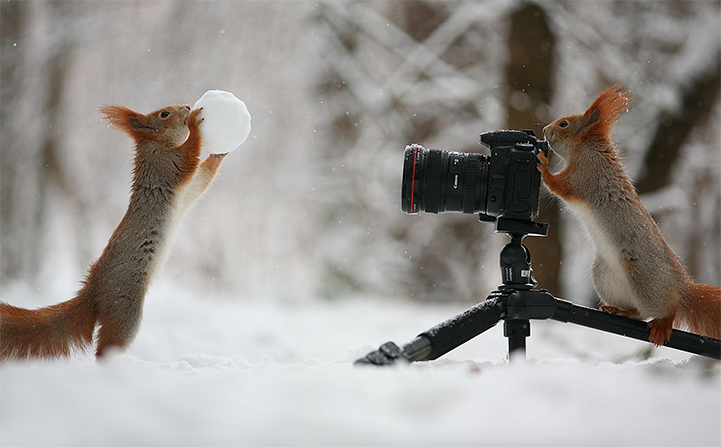 The most charming squirrel photo session ever