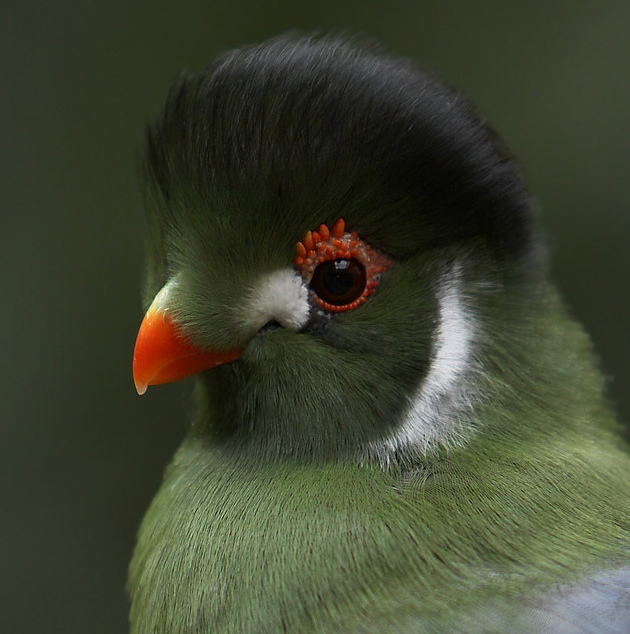 birds_16