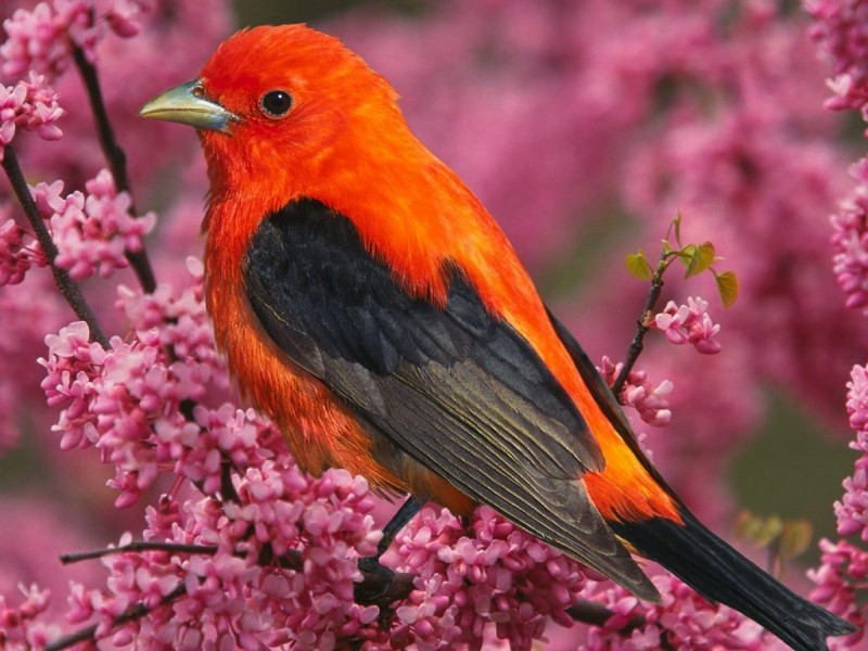 Most colorful birds in the world. Part 1