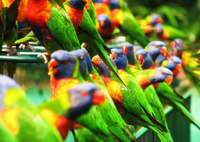 birds_18