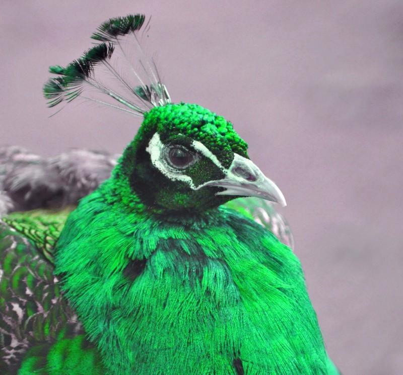 birds_21