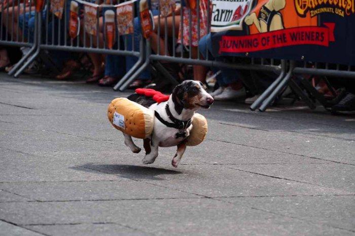 hotdog-1