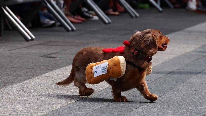 hotdog-13