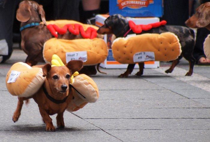 hotdog-5