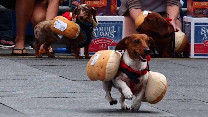 hotdog-7