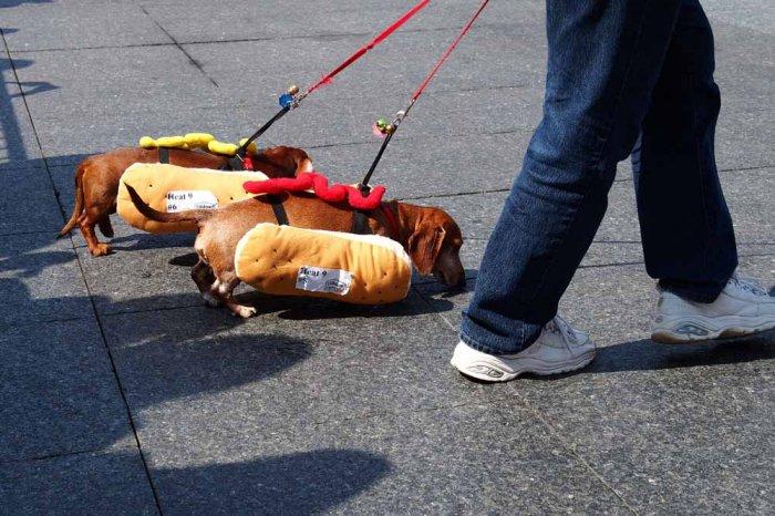 hotdog-9
