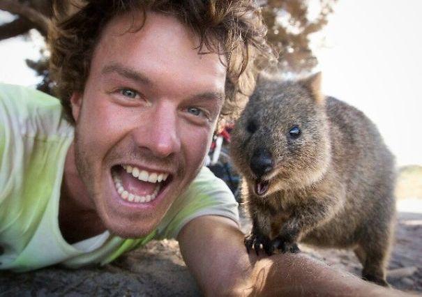 New trend in Australia – Quokka selfie