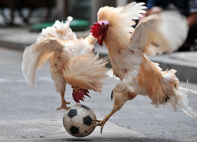 Animals and soccer