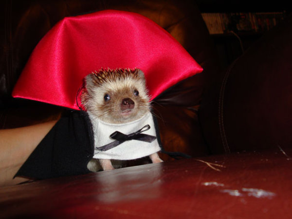 Animals' costumes for Halloween
