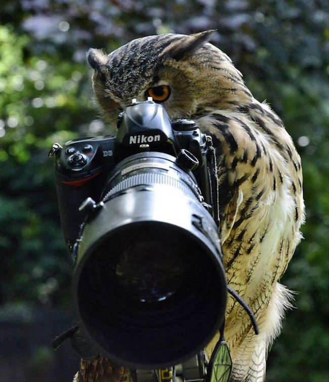 11 cute images of animals like taking photos