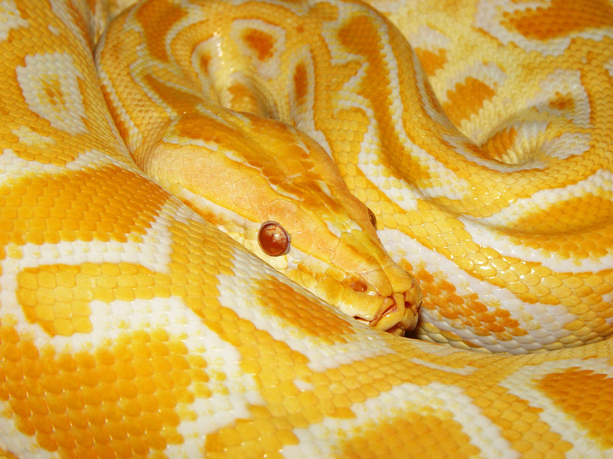 Most beautiful snakes on the planet