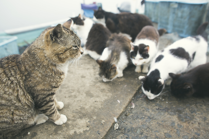 Tashirojima- The Cat Island