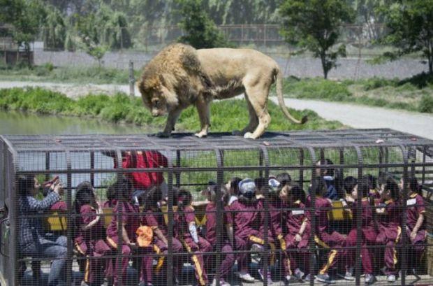 Safari Lion Zoo in Chile