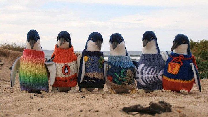 Penguin Sweaters_10