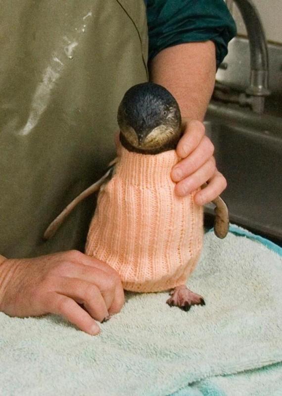 Penguin Sweaters_2