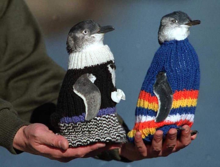 Penguin Sweaters_3