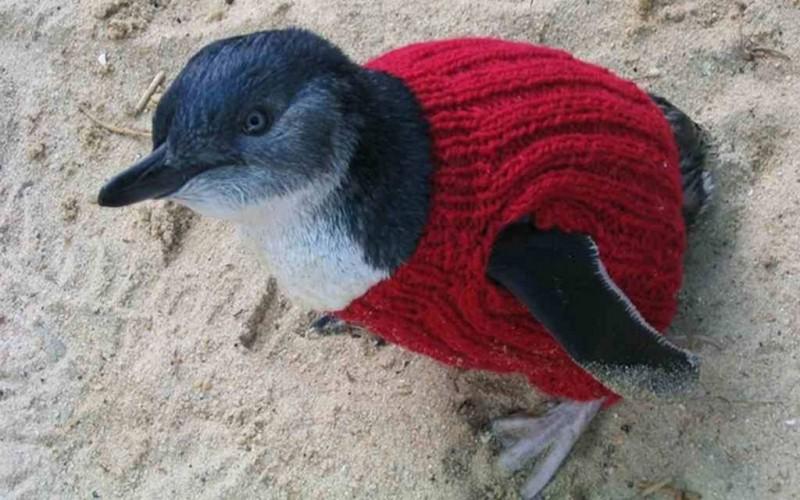 Penguin Sweaters_9