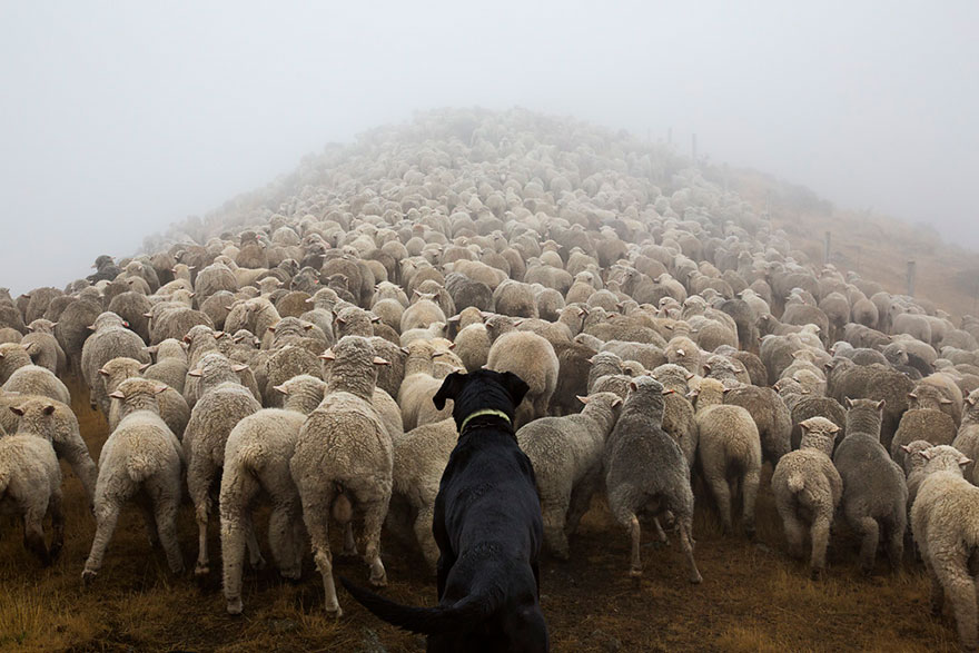 The world's hardest working dogs