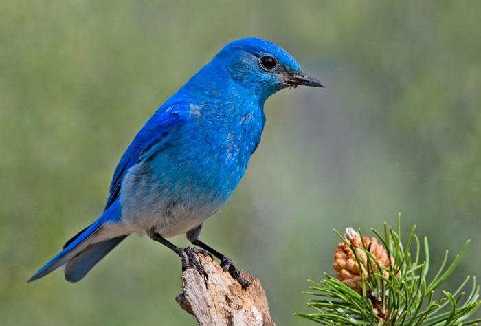 birds_22