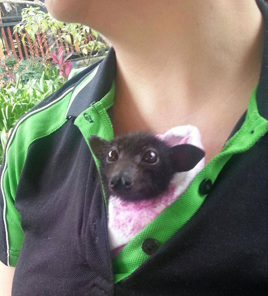 Australian Bat Clinic