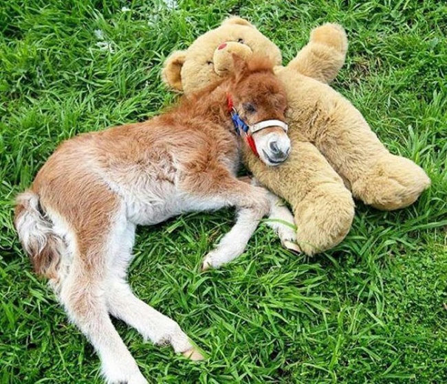 Teddy bear and mini horse