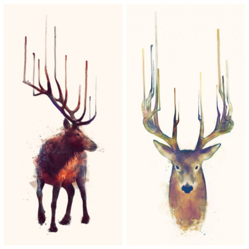 Beautiful animal portraits by Amy Hamilton