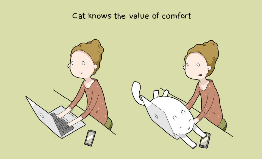 10 advantages of having a cat