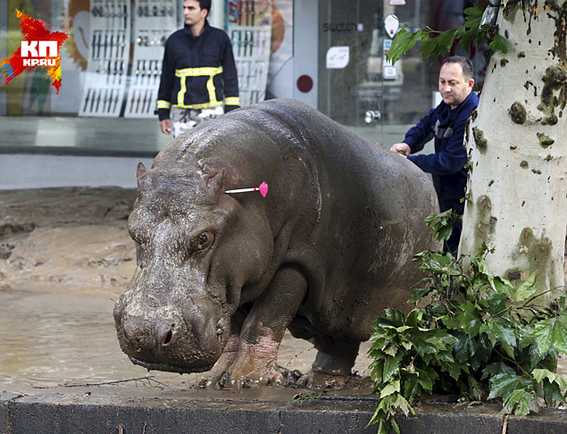 Flooding in Tbilisi: animals have escaped from the zoo