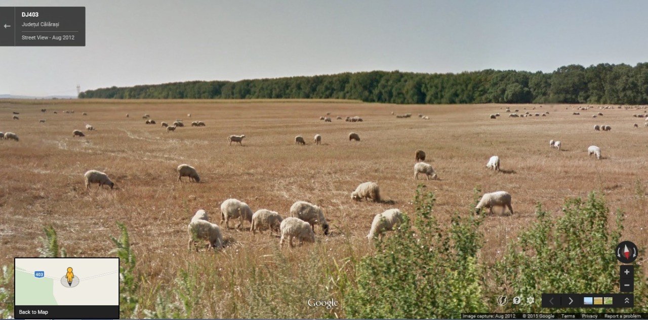 Google Sheep View