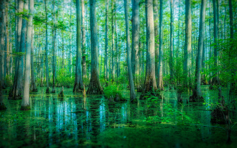 Swamp may also be beautiful