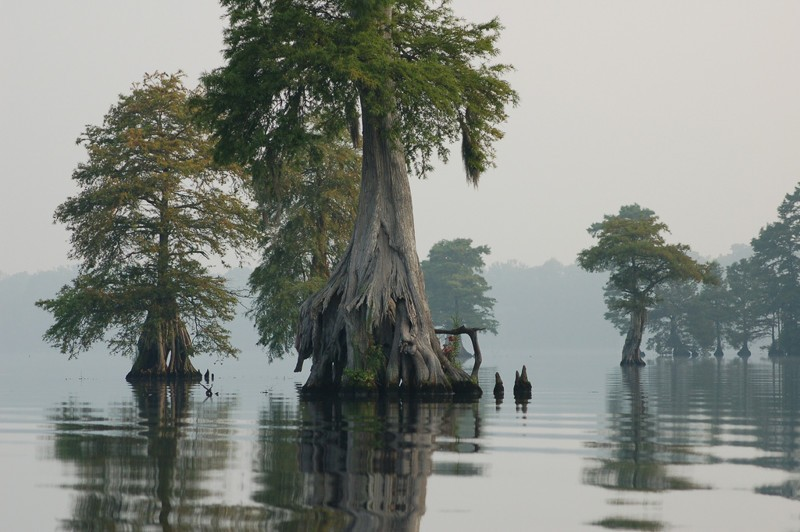 Swamps may also be beautiful