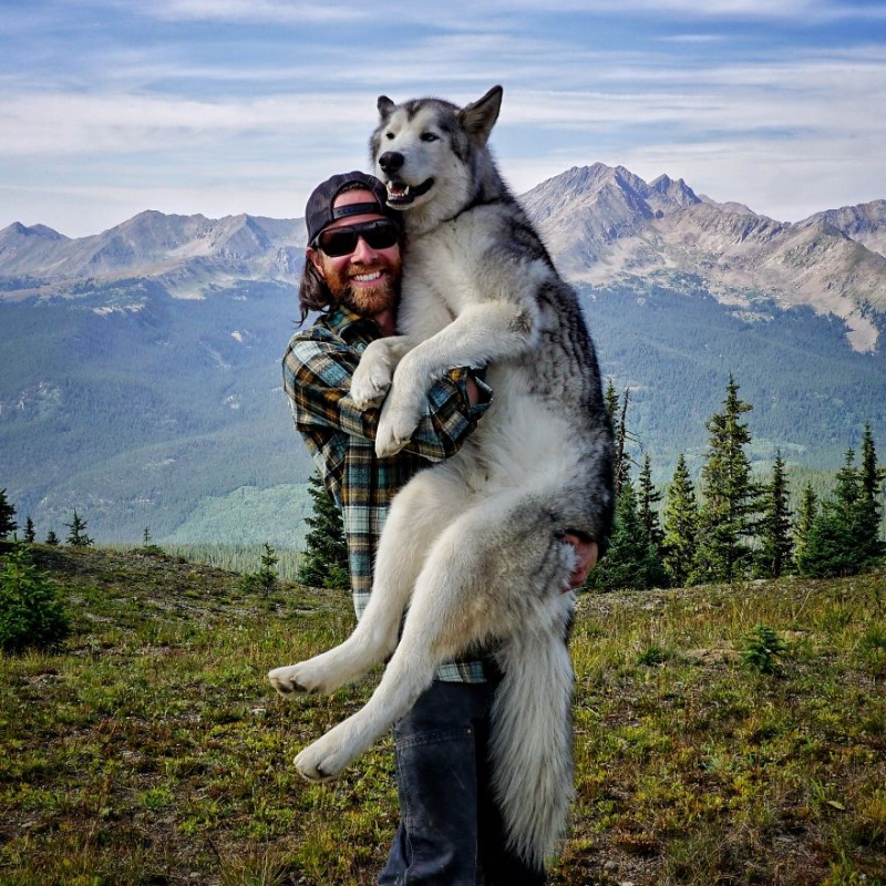A man travels around the world with his dog 15