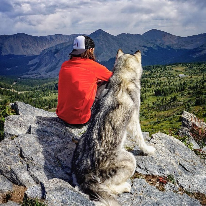A man travels around the world with his dog