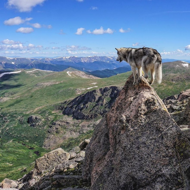 A man travels around the world with his dog 6