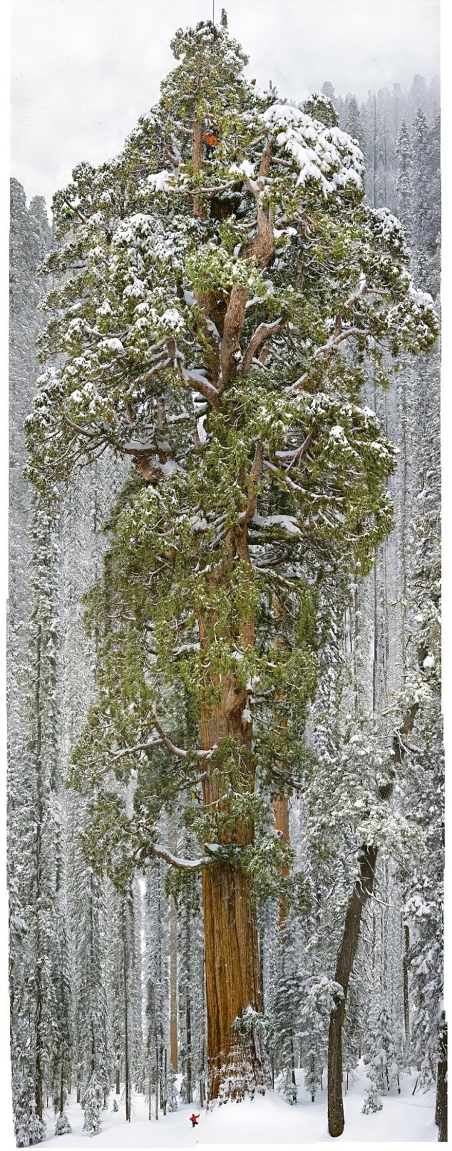 Tree that took 32 days to photograph 8