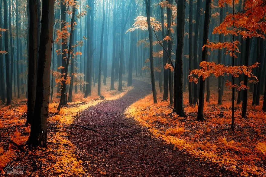 fantastic autumn forests 1