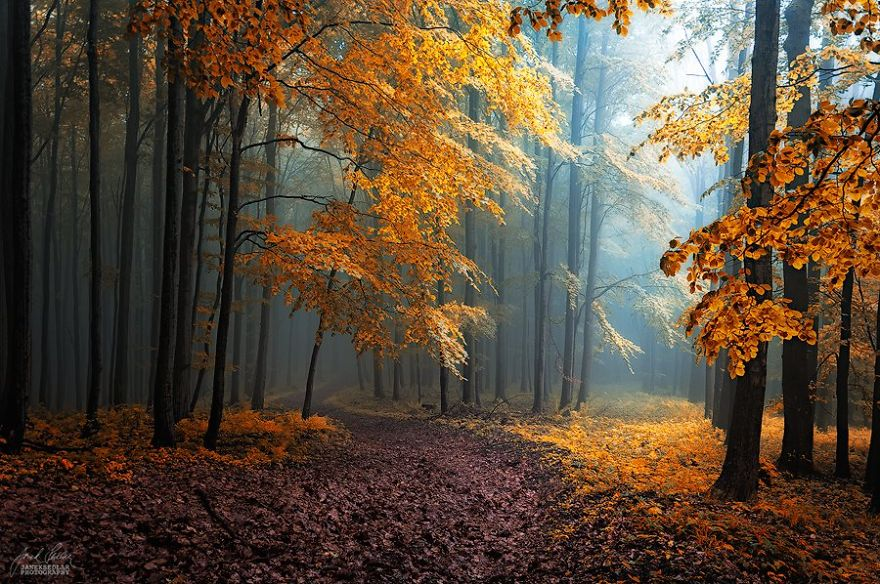 fantastic autumn forests 10