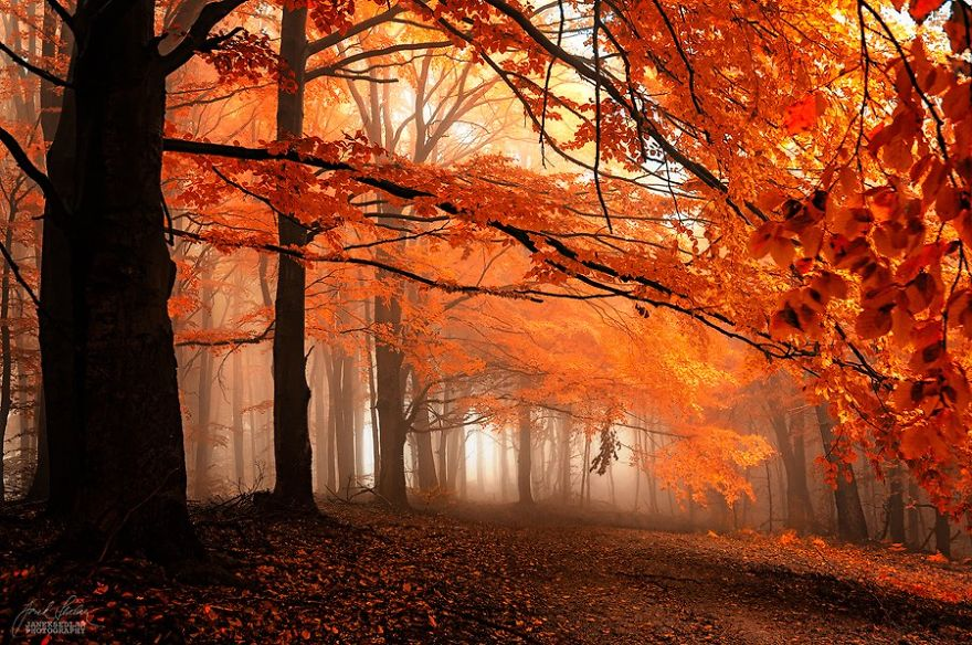 fantastic autumn forests 2