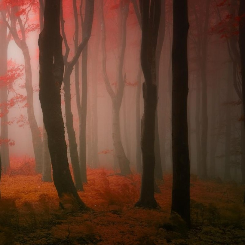 Fantastic autumn forests. Part 1